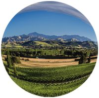 What is Sustainable Winegrowing New Zealand?